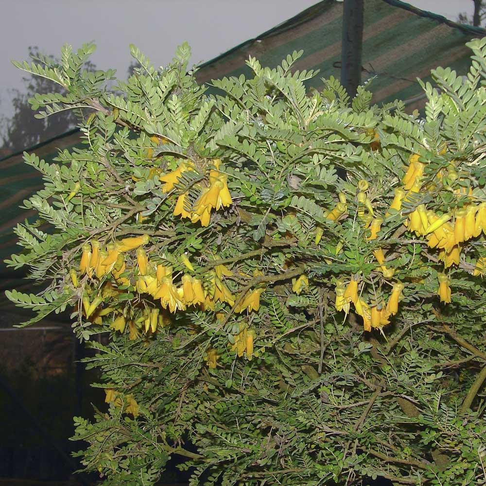 6. ramas en flor