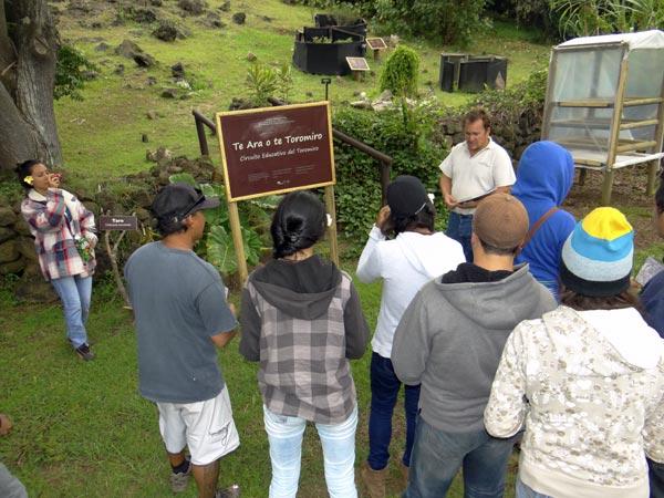 Se postula iniciativa de conservación del toromiro