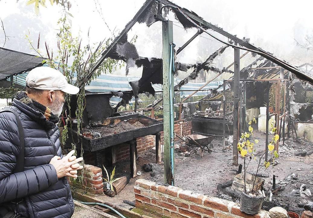 Jardín Botánico pierde semillas de especie extinta tras el incendio en un vivero
