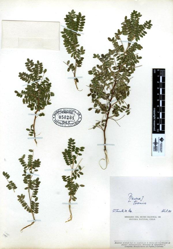 herbariotoromiro